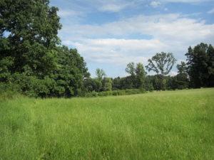 zadní hranice pozemku a na něj navazující parcely