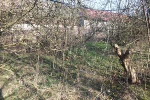 6_zahrada