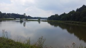 Prodej rybníků společně s pozemky, Obec Nepomuk, okres Plzeň